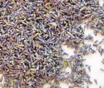Lavender Flower Buds #1 - 1/2 Lb  (5+ lbs may incur extra shipping)