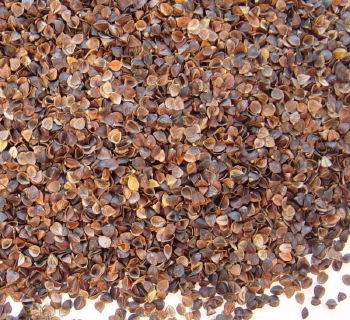 Buckwheat Hulls - 1/2 Lb (may incur extra shipping costs)