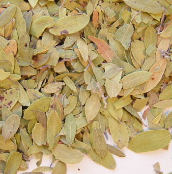 Uva Ursi Leaves (Pinguica) - 1/2 Lb